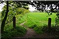 SD4105 : Path from Moor Hall Farm to Boundary Plantation, Aughton : Week 18