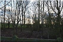 TL4258 : Woodland by The Harcamlow Way by N Chadwick