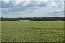 TL4258 : West of Cambridge by N Chadwick