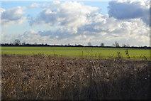 TL4258 : Field near The West Cambridge Site by N Chadwick