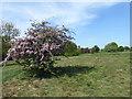 TQ5389 : Conservation Area in Haynes Park by Marathon
