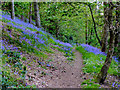 SO8689 : Woodland track north of Greensforge in Staffordshire by Roger  Kidd