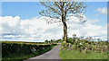 J1770 : The Crewe Park Road near Glenavy (May 2017) by Albert Bridge