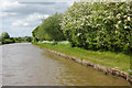 SJ6257 : Middlewich Branch Canal, west of Sandholes Bridge by Stephen McKay