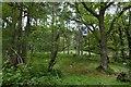 NS3995 : Sallochy Forest by Richard Webb