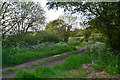 SS9941 : West Somerset : Stapling Lane by Lewis Clarke