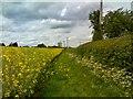 SO8593 : Rape Seed Field by Gordon Griffiths