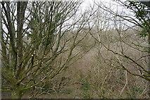 SX4962 : Widewell Wood by N Chadwick