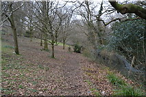 SX4961 : Path into Widewell Wood by N Chadwick