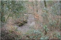 SX4961 : Stream, Widewell Wood by N Chadwick