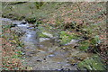 SX4961 : Woodland stream by N Chadwick
