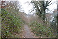 SX4861 : Footpath through Porsham Wood by N Chadwick