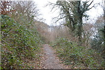 SX4861 : Footpath through Porsham Wood by N Chadwick