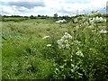 SP3532 : Farmland at Hook Norton by Philip Halling