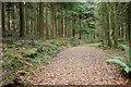 SW9968 : Track, Hustyn Wood by Derek Harper
