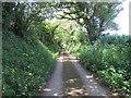 SW9943 : Narrow Lane by T W Eyre