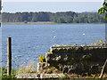 NJ7807 : Mute Swans on Loch of Skene by Stanley Howe