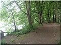 SX8060 : Riverside path [4]  by Michael Dibb