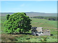 NY8646 : Ruined barn in the Byerhope valley by Mike Quinn