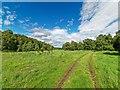 NJ0831 : Delliefure Woodland Trail by valenta