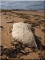 NT6579 : Coastal East Lothian : Surrealistic Pillow : Week 27