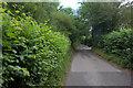 SP9506 : Hog Lane near Woodfield Spring Farm by Robert Eva