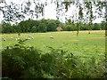 SU8965 : Field next to Red Cottage near Rapley Farm by James Emmans