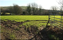 SX0780 : Field near Pitt House by Derek Harper