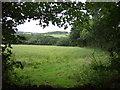 SW6031 : Crop field near Godolphin Cross by JThomas