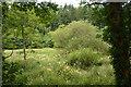 SX0169 : Cornwall : Grassland by Lewis Clarke