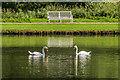 SE2868 : Swan symmetry : Week 29