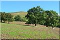 SO1120 : Trees in field below Tor y Foel by David Martin