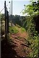 SX8965 : Path between fences, Shiphay by Derek Harper