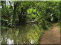 SU4619 : River Itchen above Stoke Lock by David Dixon