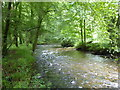 SX0872 : The River Camel running between Great Shell Wood and Heligan Wood by Rod Allday