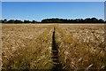 SE6248 : Minster Way towards Heslington Common : Week 32
