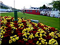 G9278 : Floral display, Donegal by Kenneth  Allen