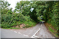 SY5498 : West Dorset : Country Lane by Lewis Clarke