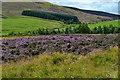 NT9326 : Landscape near Commonburn House by David Martin