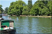 SP5105 : River Thames by N Chadwick