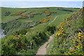 SX2451 : South West Coast Path by N Chadwick