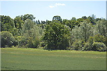 TL5234 : Woodland, Debden Water by N Chadwick
