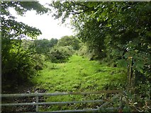 SX5597 : Green lane across marshy land by David Smith