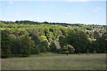SU8695 : Hughenden Park by N Chadwick