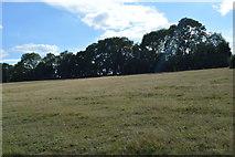 SU8596 : Pasture by N Chadwick