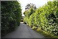 SU8596 : Louches Lane by N Chadwick