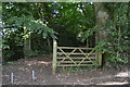 SU8596 : Footpath into the woods by N Chadwick