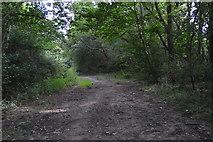 SU8495 : Footpath, Downley Common by N Chadwick