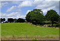 SJ9052 : Pasture west of Stockton Brook, Stoke-on-Trent by Roger  Kidd