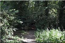 SU8595 : Footpath, Downley Common by N Chadwick
